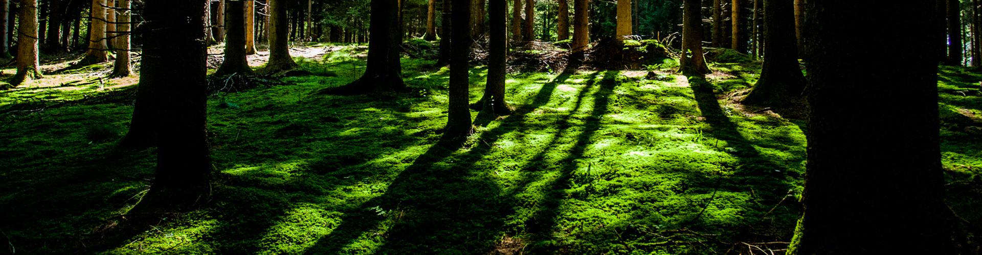 trees-long